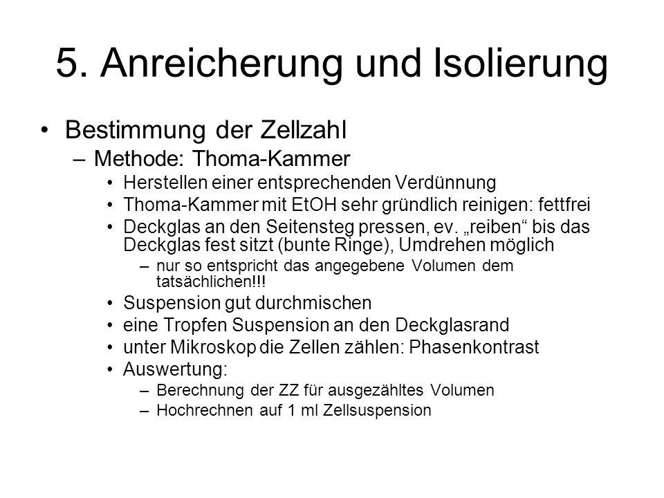5. Anreicherung und Isolierung Bestimmung der Zellzahl –Methode: Thoma-Kammer Herstellen einer entsprechenden Verdünnung Thoma-Kammer mit EtOH sehr gr