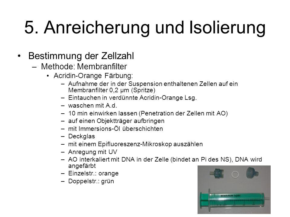 5. Anreicherung und Isolierung Bestimmung der Zellzahl –Methode: Membranfilter Acridin-Orange Färbung: –Aufnahme der in der Suspension enthaltenen Zel