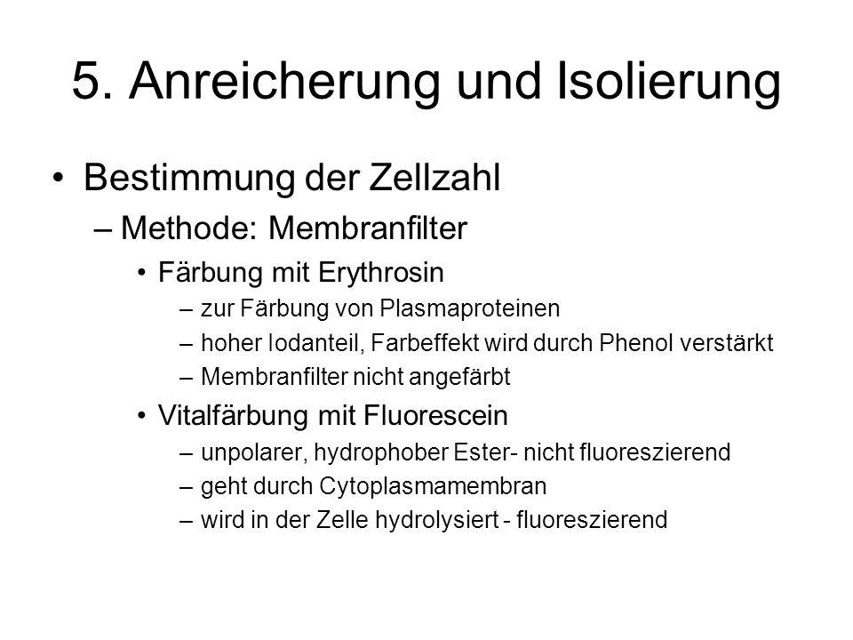 5. Anreicherung und Isolierung Bestimmung der Zellzahl –Methode: Membranfilter Färbung mit Erythrosin –zur Färbung von Plasmaproteinen –hoher Iodantei