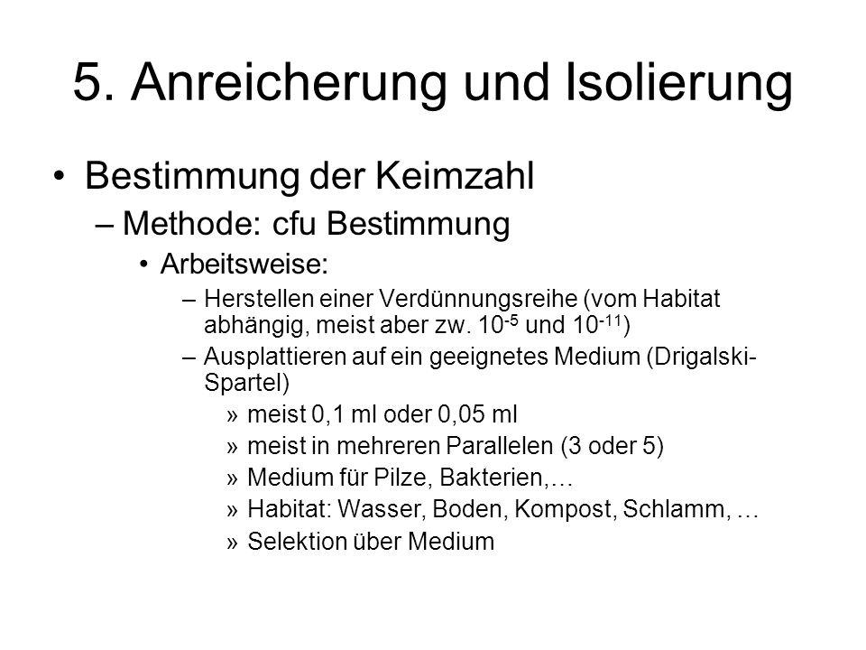 5. Anreicherung und Isolierung Bestimmung der Keimzahl –Methode: cfu Bestimmung Arbeitsweise: –Herstellen einer Verdünnungsreihe (vom Habitat abhängig