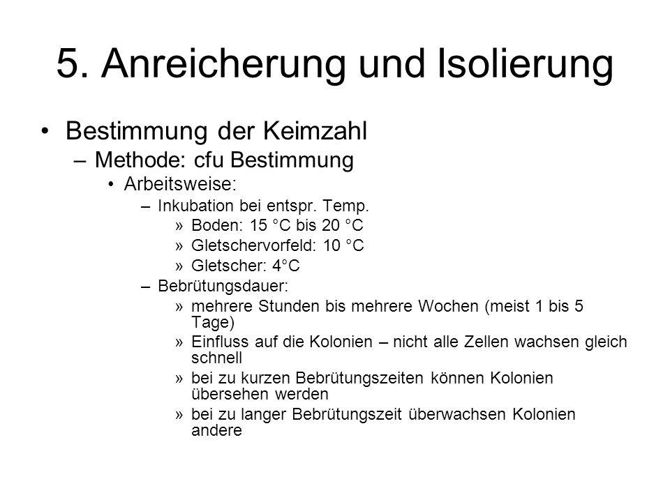 5. Anreicherung und Isolierung Bestimmung der Keimzahl –Methode: cfu Bestimmung Arbeitsweise: –Inkubation bei entspr. Temp. »Boden: 15 °C bis 20 °C »G