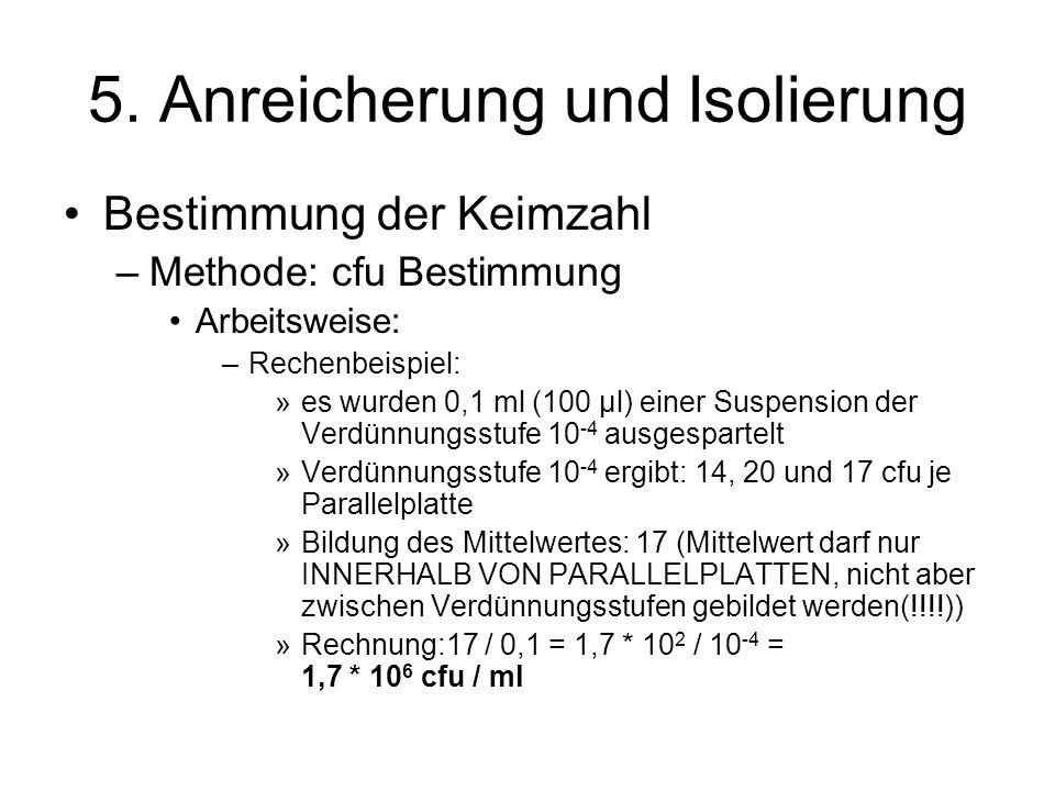 5. Anreicherung und Isolierung Bestimmung der Keimzahl –Methode: cfu Bestimmung Arbeitsweise: –Rechenbeispiel: »es wurden 0,1 ml (100 µl) einer Suspen
