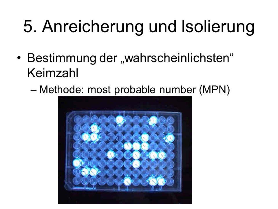 5. Anreicherung und Isolierung Bestimmung der wahrscheinlichsten Keimzahl –Methode: most probable number (MPN)