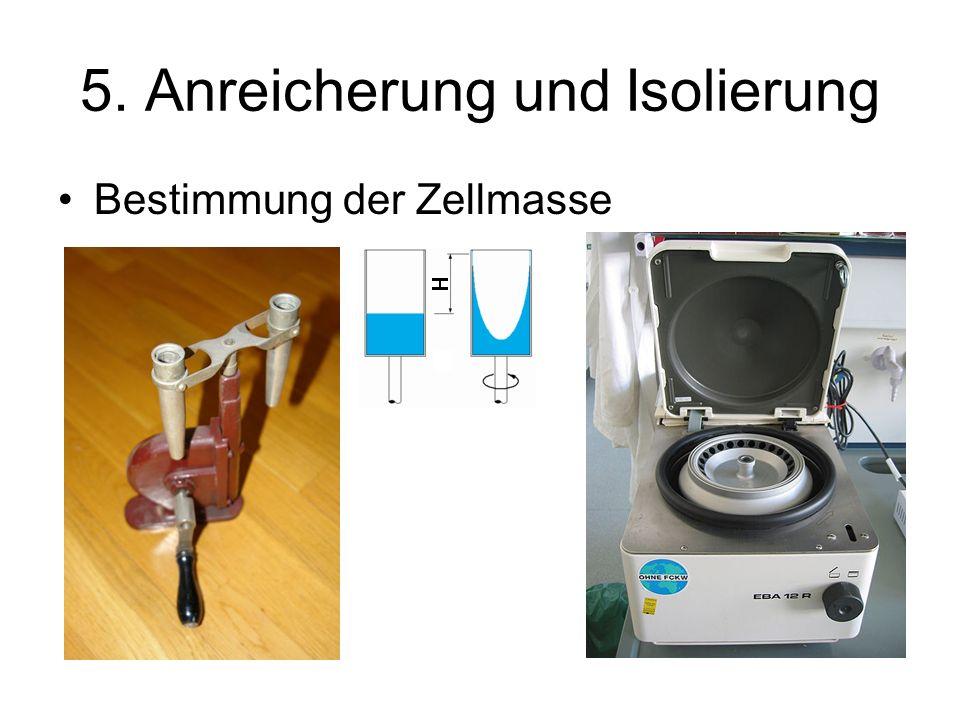 5. Anreicherung und Isolierung Bestimmung der Zellmasse