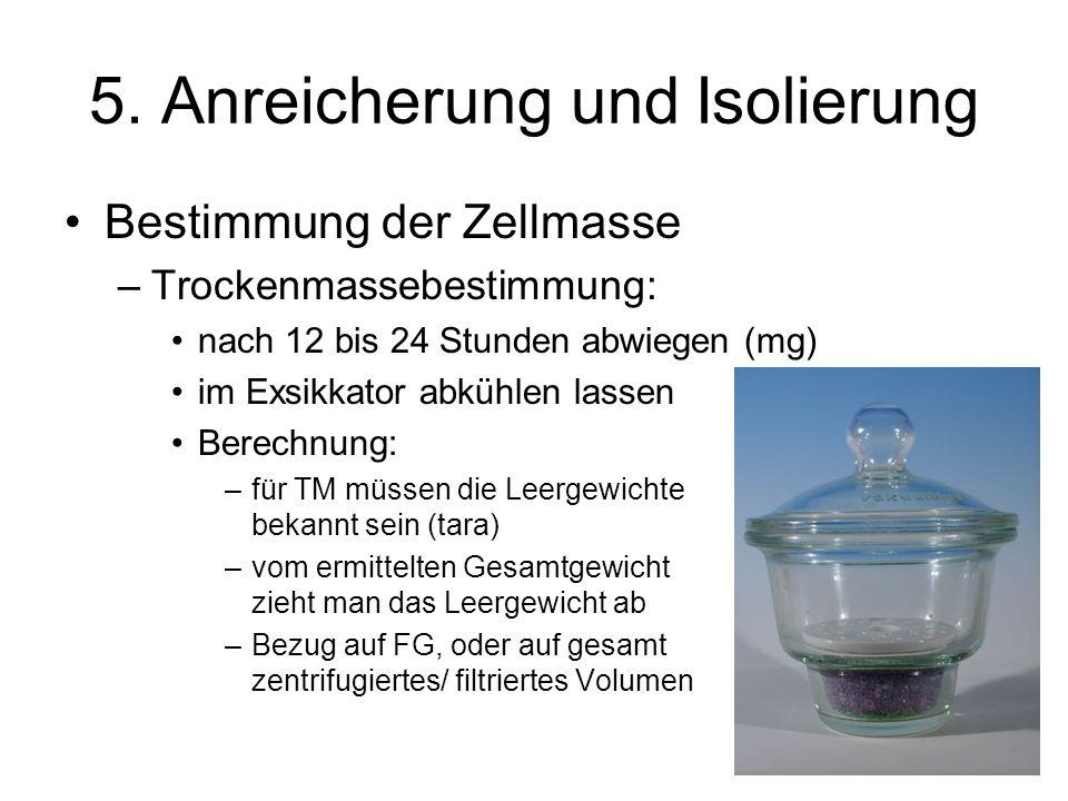 5. Anreicherung und Isolierung Bestimmung der Zellmasse –Trockenmassebestimmung: nach 12 bis 24 Stunden abwiegen (mg) im Exsikkator abkühlen lassen Be