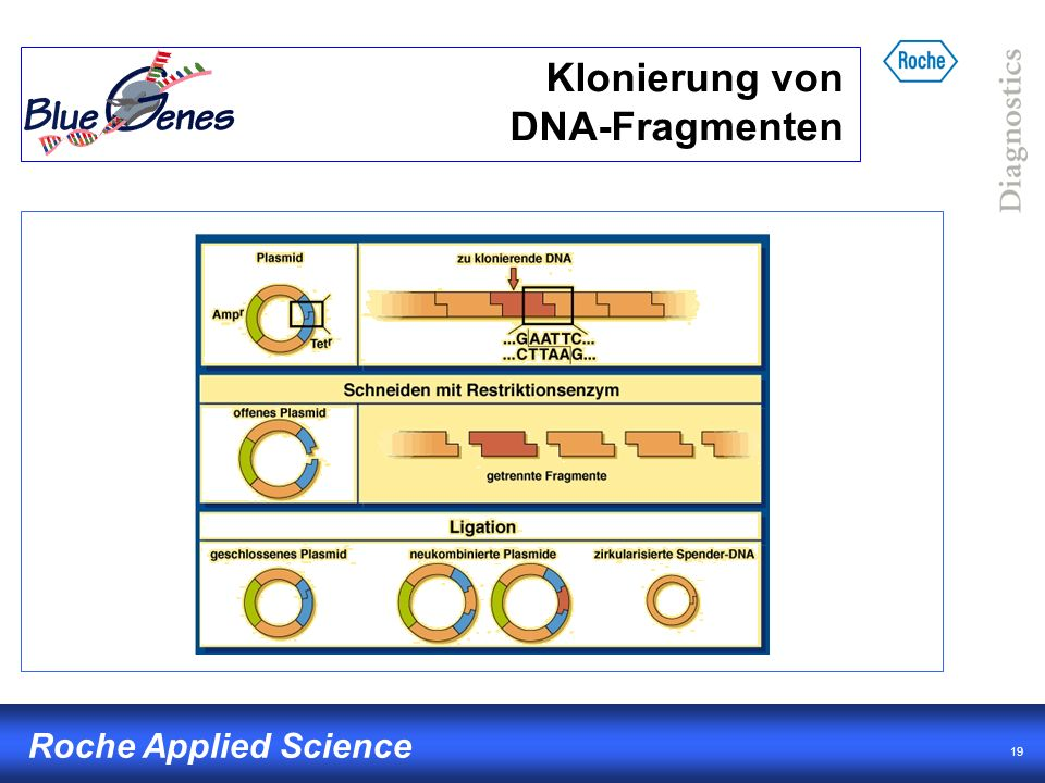 19 Roche Applied Science Klonierung von DNA-Fragmenten