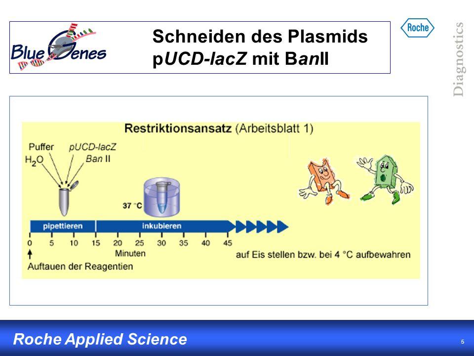 16 Roche Applied Science Auswertung Vergleich mit bekanntem Bandenmuster DNA- Fragmente (DNA- Molekulargewichtsstandard) BanII schneidet 3x in Plasmid pUCD-lacZ (5669 bp) 3 Fragmente erwartet Berechnung der Größe anhand Plasmidkarte 2504 bp, 2116 bp, 1049 bp