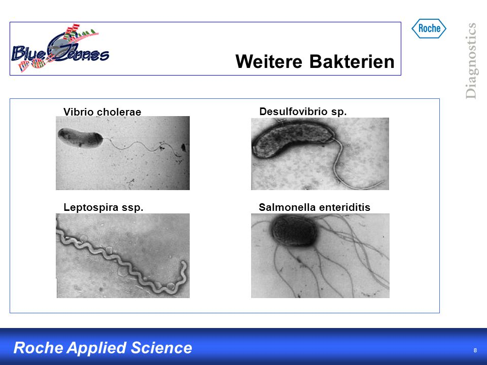 8 Roche Applied Science Weitere Bakterien Vibrio cholerae Leptospira ssp.Salmonella enteriditis Desulfovibrio sp.