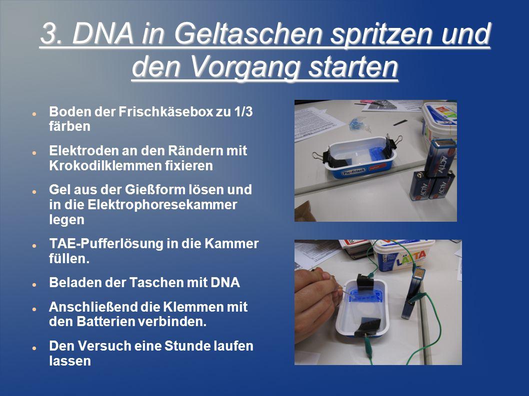 3. DNA in Geltaschen spritzen und den Vorgang starten Boden der Frischkäsebox zu 1/3 färben Elektroden an den Rändern mit Krokodilklemmen fixieren Gel