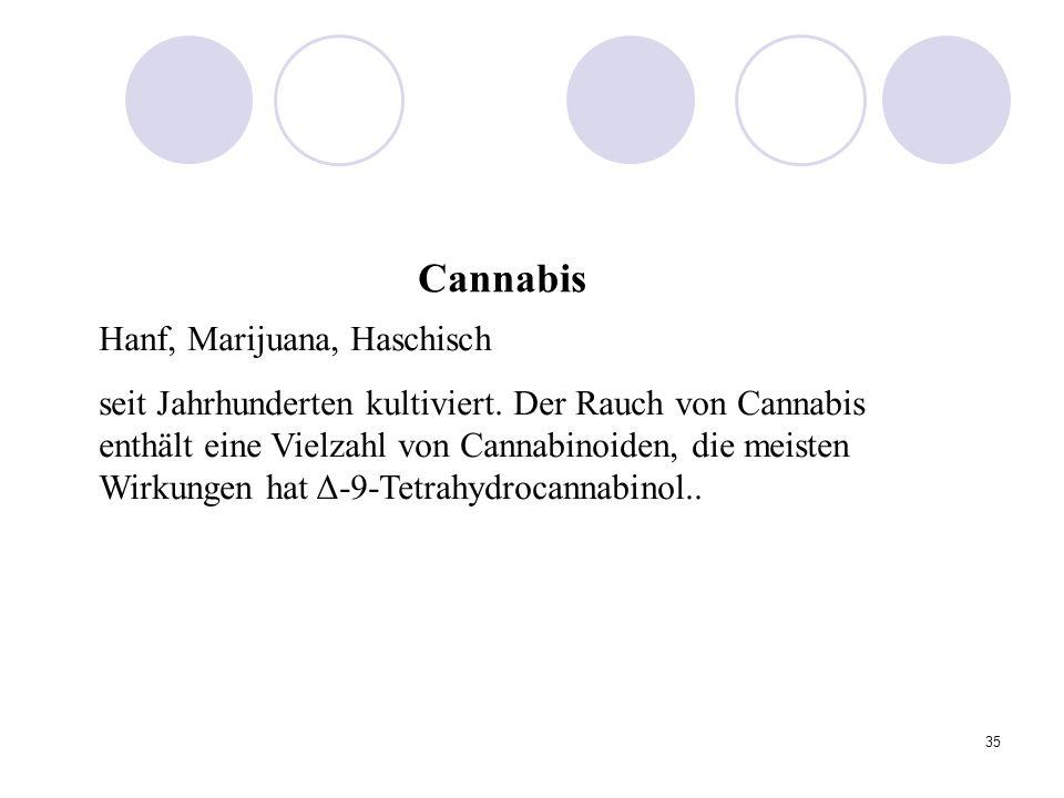 35 Hanf, Marijuana, Haschisch seit Jahrhunderten kultiviert.
