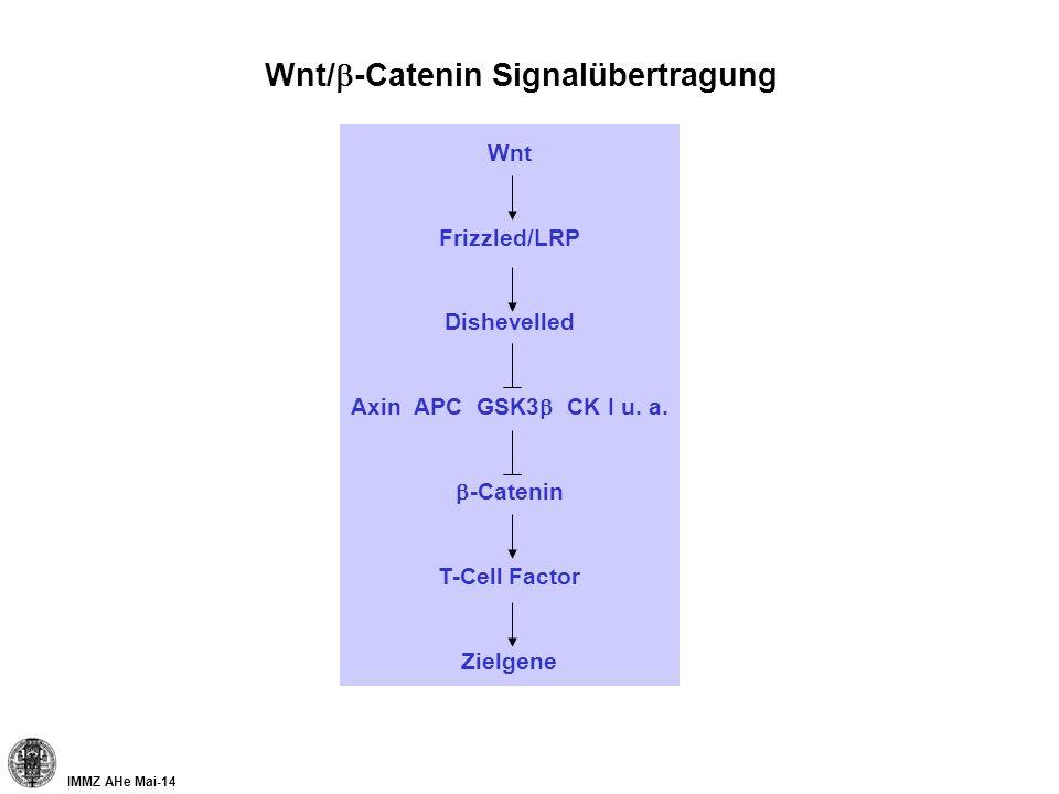 IMMZ AHe Mai-14 Wnt/ -Catenin Signalübertragung Wnt Frizzled/LRP Dishevelled Axin APC GSK3 CK I u. a. -Catenin T-Cell Factor Zielgene