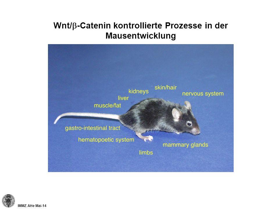 IMMZ AHe Mai-14 Wnt/ -Catenin kontrollierte Prozesse in der Mausentwicklung