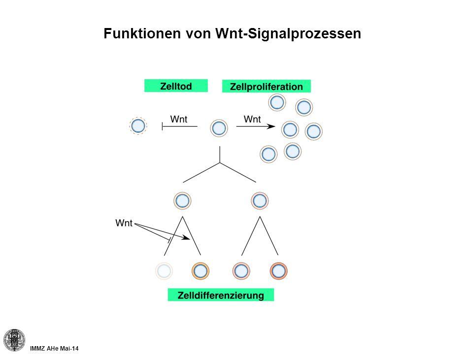 IMMZ AHe Mai-14 Wnt/ -Catenin und Gewebehomöostase der Leber Hepatektomie -Catenin 5 t (min) Mutation von Wnt/ -Catenin Signalwegskomponenten: Lebertumore