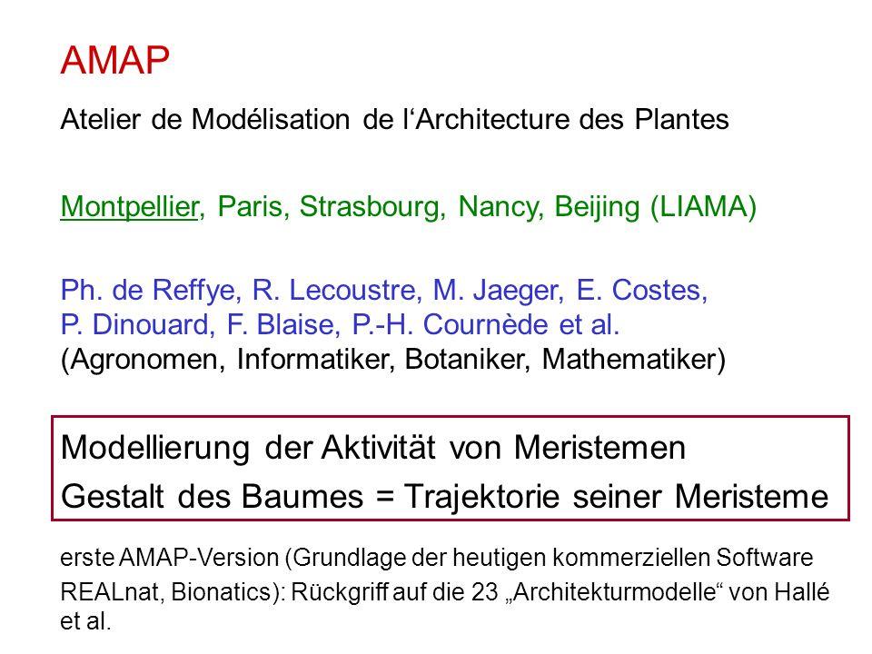 AMAP Atelier de Modélisation de lArchitecture des Plantes Montpellier, Paris, Strasbourg, Nancy, Beijing (LIAMA) Ph.