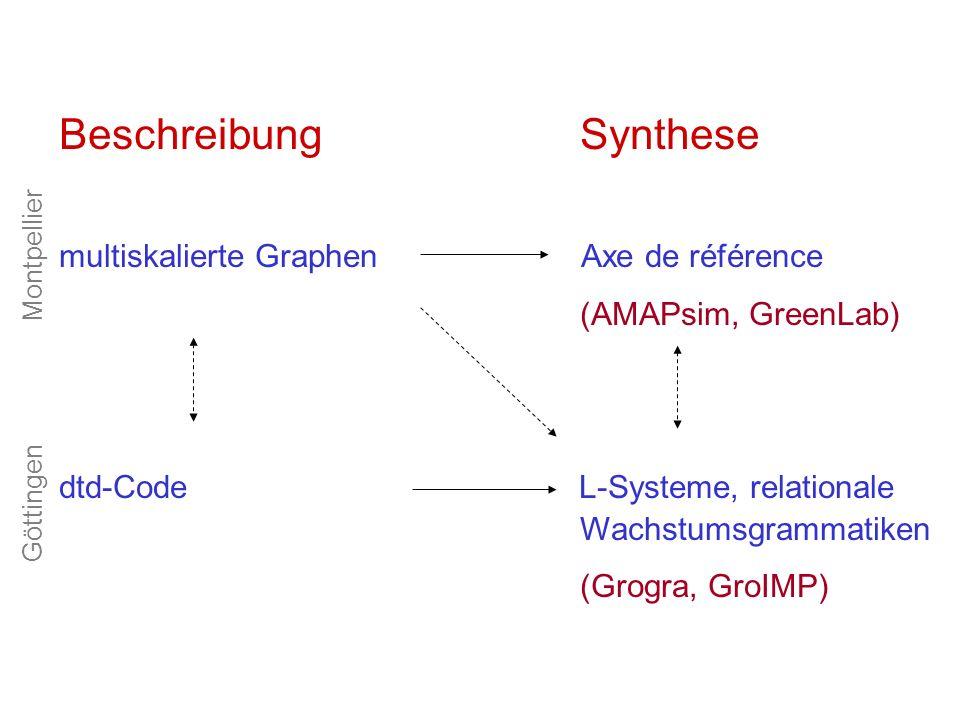 Beschreibung Synthese multiskalierte Graphen Axe de référence (AMAPsim, GreenLab) dtd-Code L-Systeme, relationale Wachstumsgrammatiken (Grogra, GroIMP) Göttingen Montpellier
