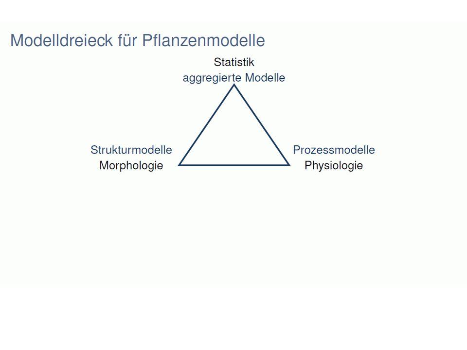 Messung von 3D-Strukturen von Pflanzen Datenaufnahme mit klassischen Mitteln: Kombination Lineal - Messschieber - Winkelmesser - Skizzenblock
