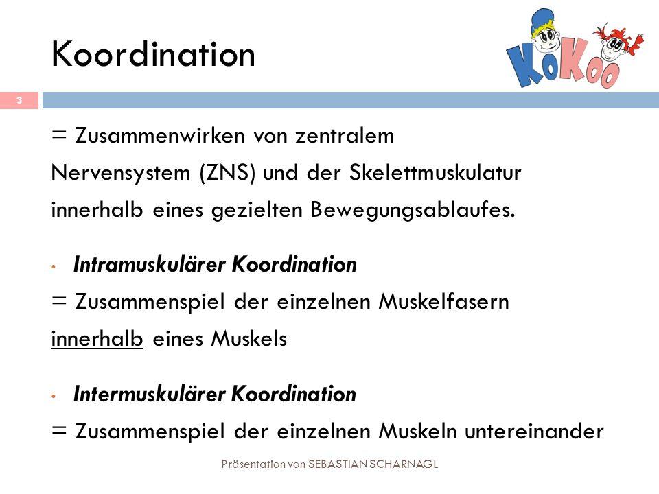Koordination Präsentation von SEBASTIAN SCHARNAGL 3 = Zusammenwirken von zentralem Nervensystem (ZNS) und der Skelettmuskulatur innerhalb eines geziel