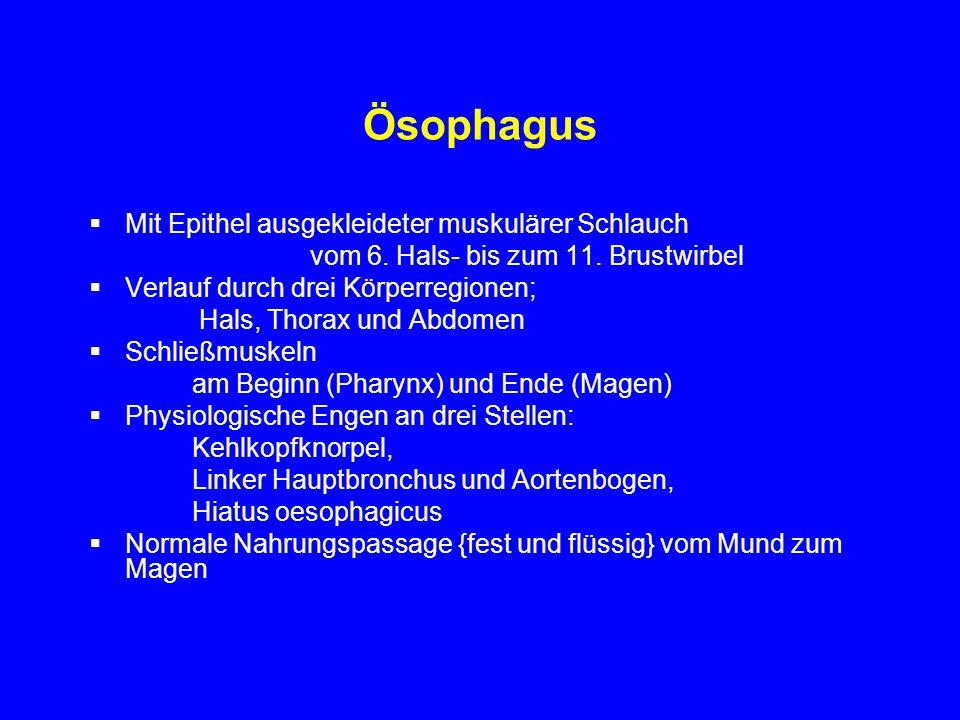Ösophagus Mit Epithel ausgekleideter muskulärer Schlauch vom 6. Hals- bis zum 11. Brustwirbel Verlauf durch drei Körperregionen; Hals, Thorax und Abdo