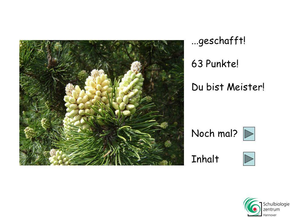 Kiefern Tannen und Fichten Lärchen (im Winter)Lärchen (im Winter) Wacholder 63