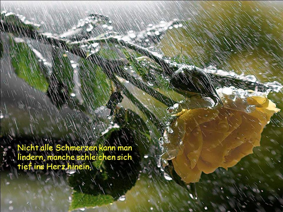 Nicht alle Schmerzen kann man lindern, manche schleichen sich tief ins Herz hinein,