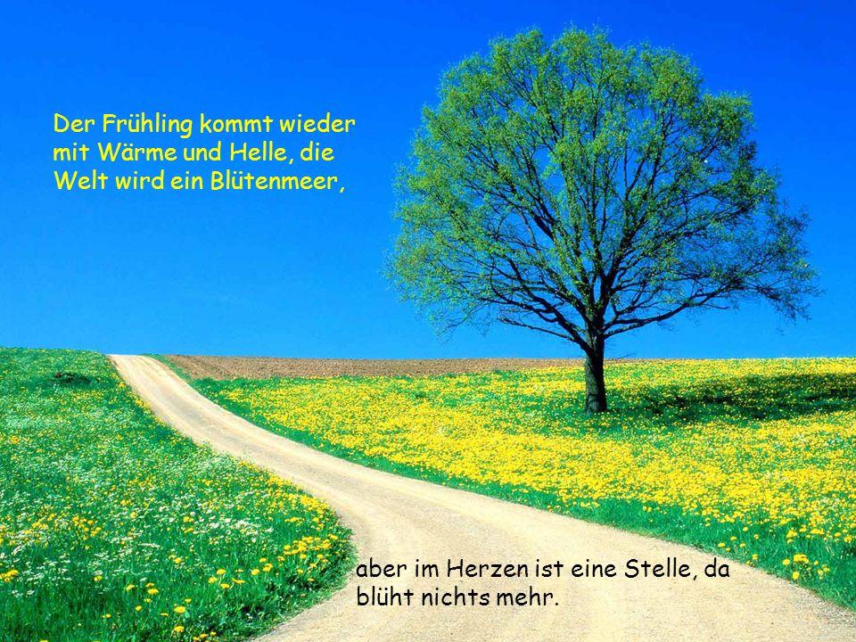 Der Frühling kommt wieder mit Wärme und Helle, die Welt wird ein Blütenmeer, aber im Herzen ist eine Stelle, da blüht nichts mehr.
