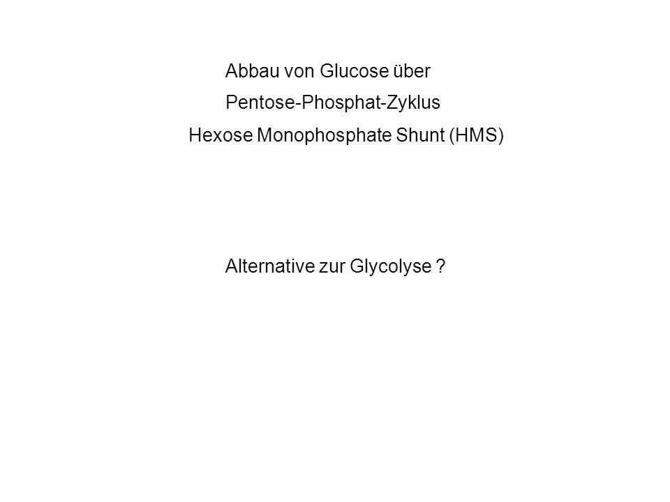 Ankopplung an Glycolyse für DNA Baustein Bedarf