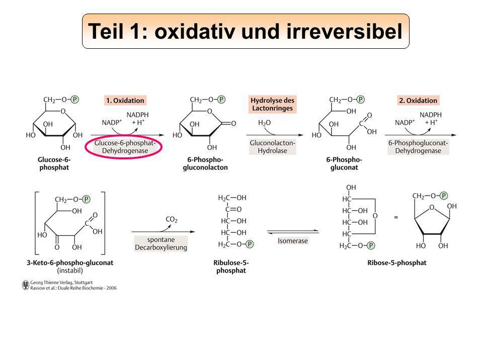 Teil 1: oxidativ und irreversibel