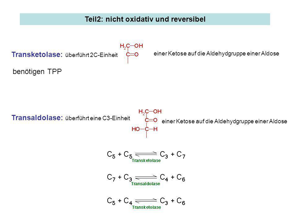 Transketolase: überführt 2C-Einheit einer Ketose auf die Aldehydgruppe einer Aldose Transaldolase: überführt eine C3-Einheit einer Ketose auf die Alde