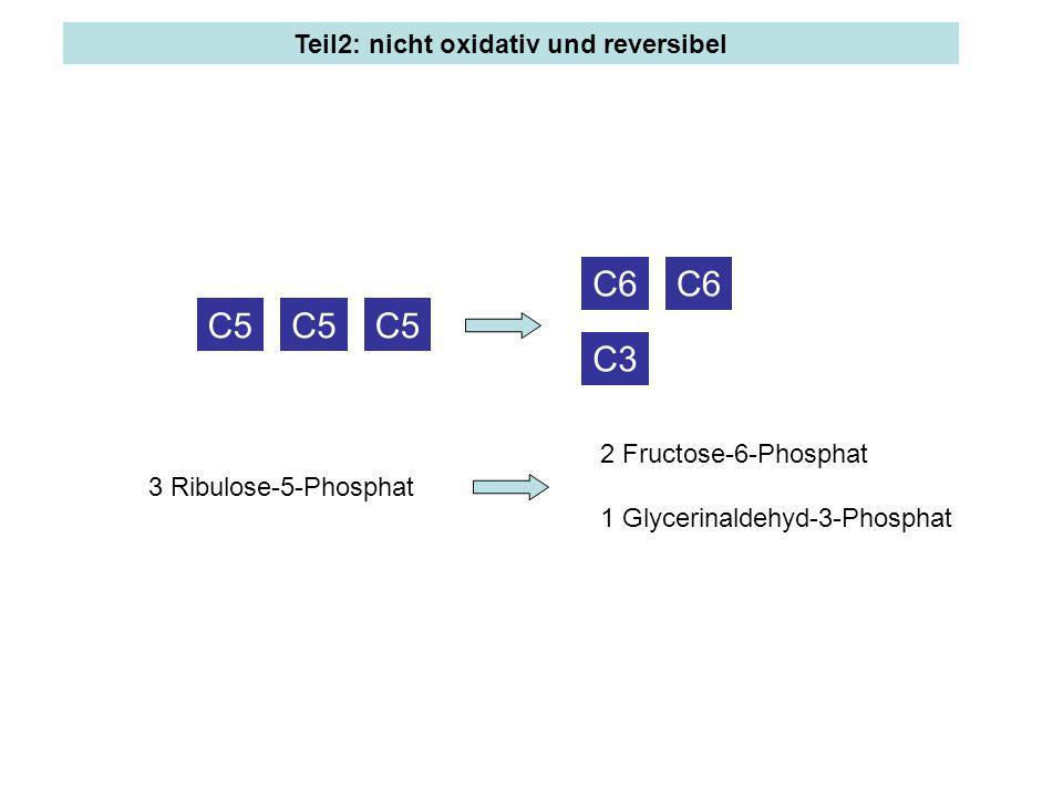 C5 C3 C6 C5 C6 3 Ribulose-5-Phosphat 2 Fructose-6-Phosphat 1 Glycerinaldehyd-3-Phosphat
