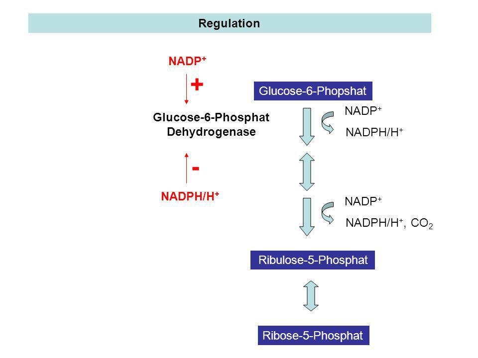 Regulation Glucose-6-Phopshat Ribulose-5-Phosphat Ribose-5-Phosphat NADPH/H + NADP + NADPH/H +, CO 2 NADP + Glucose-6-Phosphat Dehydrogenase NADP + NA