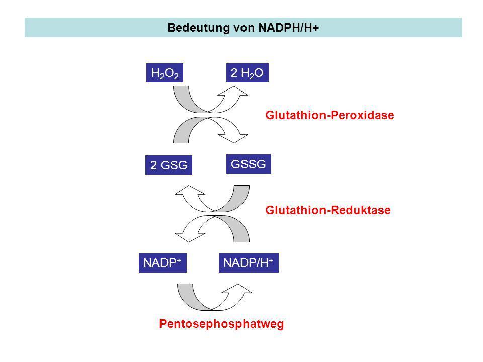 Bedeutung von NADPH/H+ H2O2H2O2 2 H 2 O 2 GSG GSSG NADP/H + NADP + Pentosephosphatweg Glutathion-Peroxidase Glutathion-Reduktase