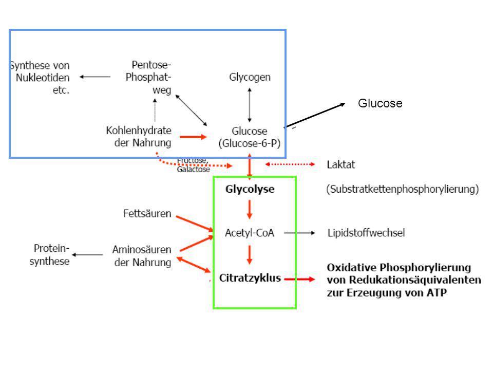 Glucose-6-PhophatRibose-5-Phosphat Glycerinaldehyd-3-Phosphat Fructose-6-Phosphat Gluconeogenese NADPH/H + Zelle mit Ribose-5-Phosphat und NADPH/H + Bedarf