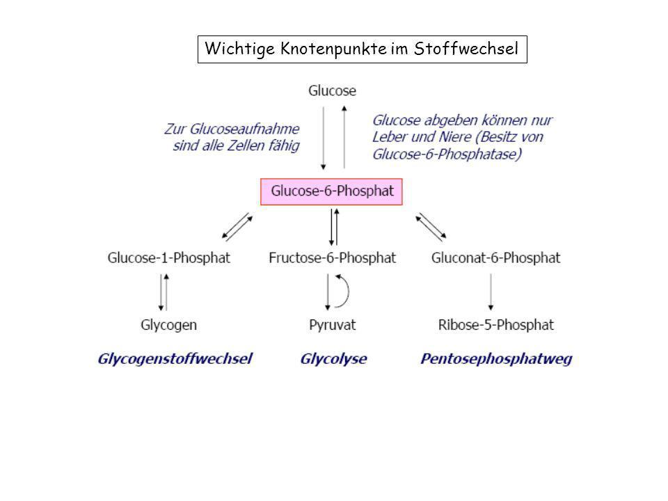 Wichtige Knotenpunkte im Stoffwechsel