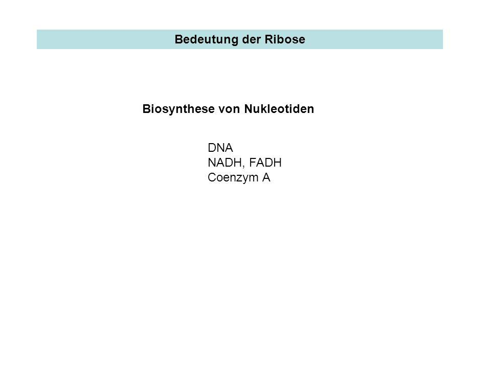 Bedeutung der Ribose Biosynthese von Nukleotiden DNA NADH, FADH Coenzym A