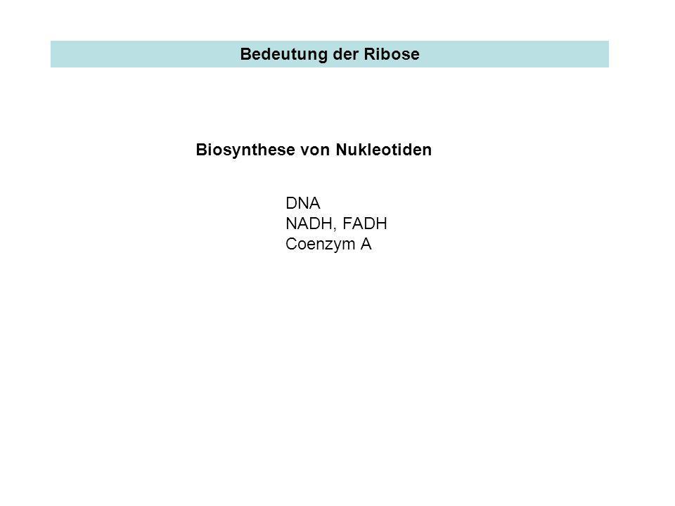 oxidativ und irreversibel 1 2 nicht oxidativ und reversibel Pentosephosphatweg