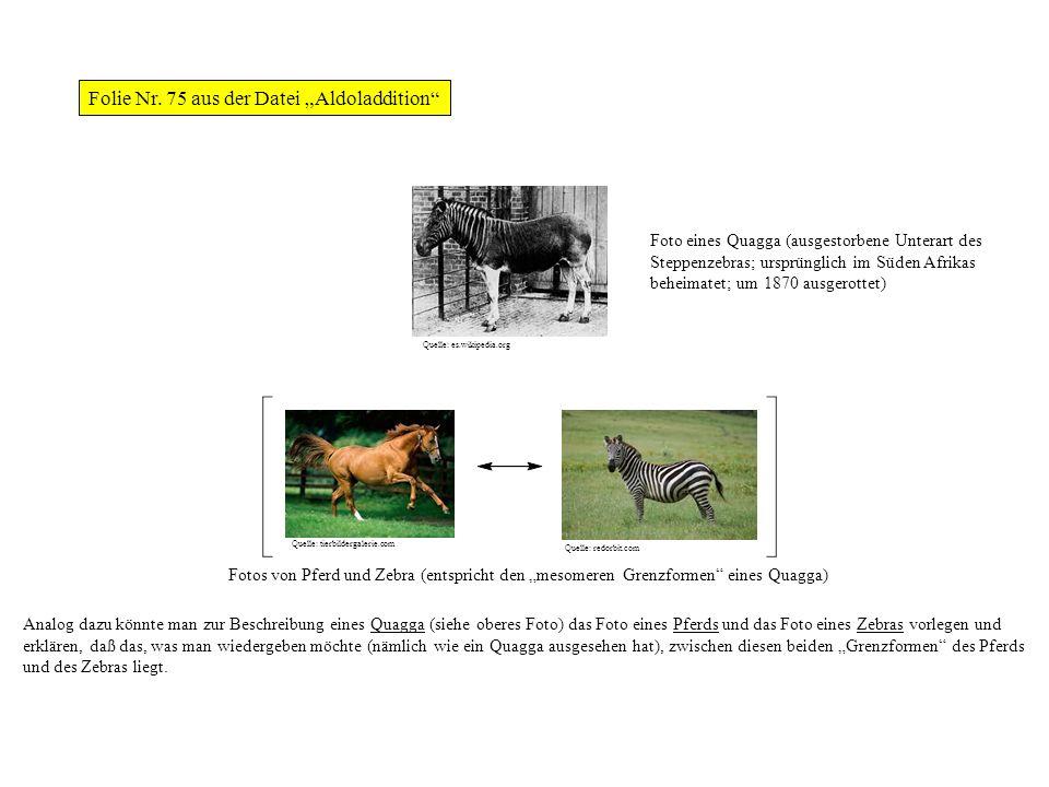 Fotos von Pferd und Zebra (entspricht den mesomeren Grenzformen eines Quagga) Analog dazu könnte man zur Beschreibung eines Quagga (siehe oberes Foto)