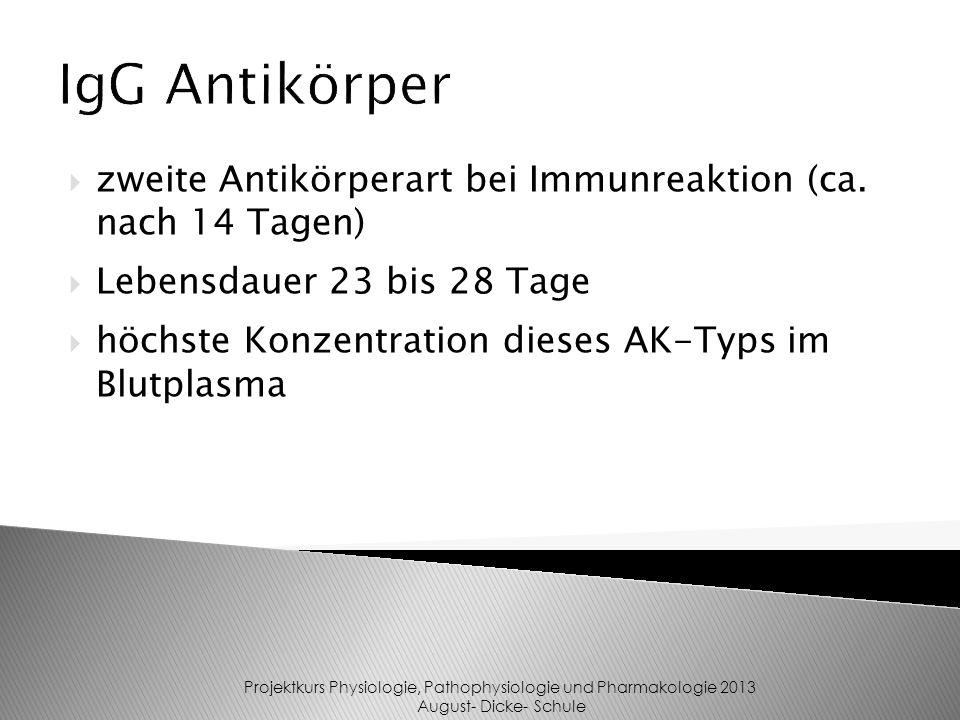 zweite Antikörperart bei Immunreaktion (ca.