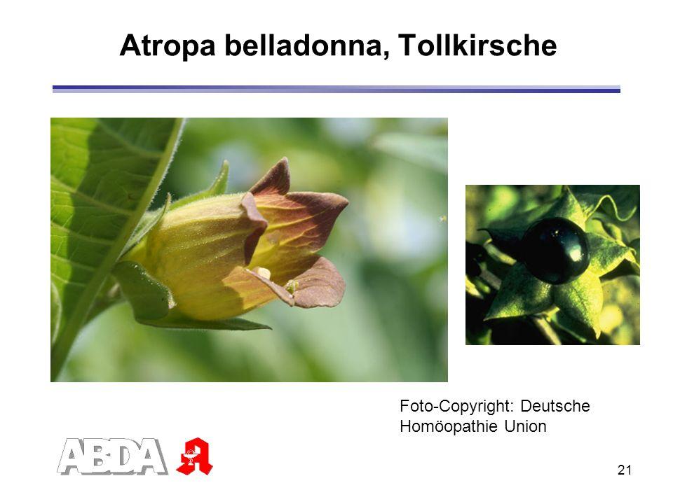 21 Atropa belladonna, Tollkirsche Foto-Copyright: Deutsche Homöopathie Union