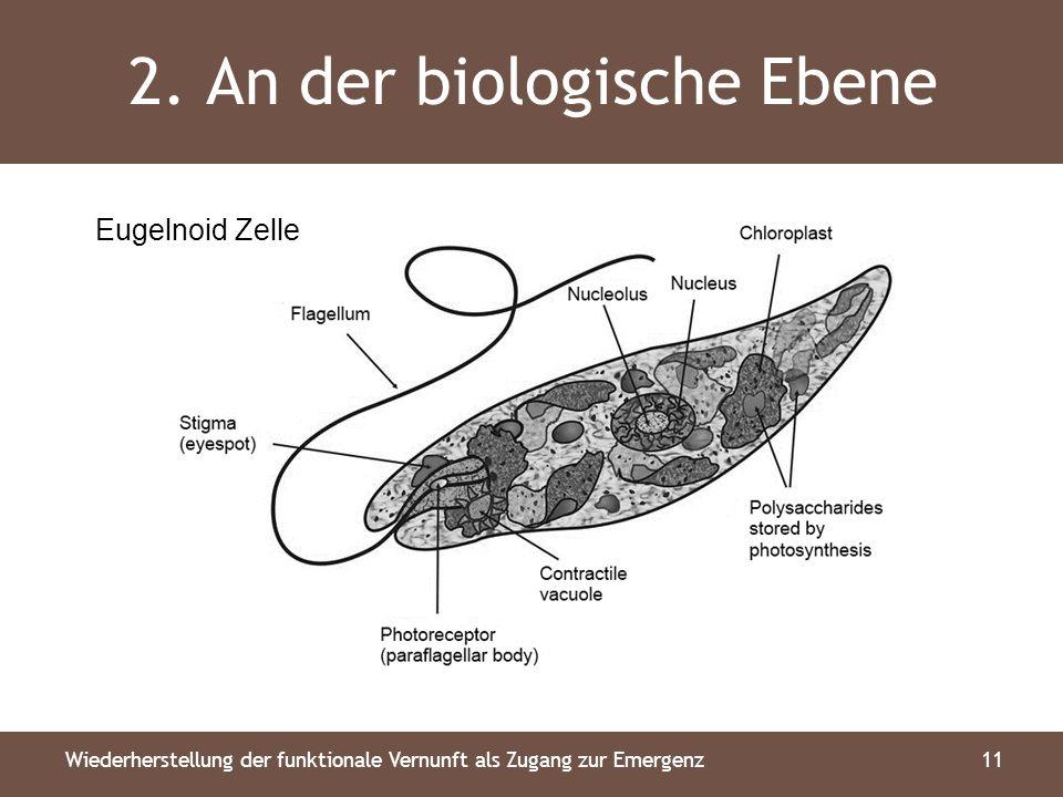 2. An der biologische Ebene 11Wiederherstellung der funktionale Vernunft als Zugang zur Emergenz Eugelnoid Zelle