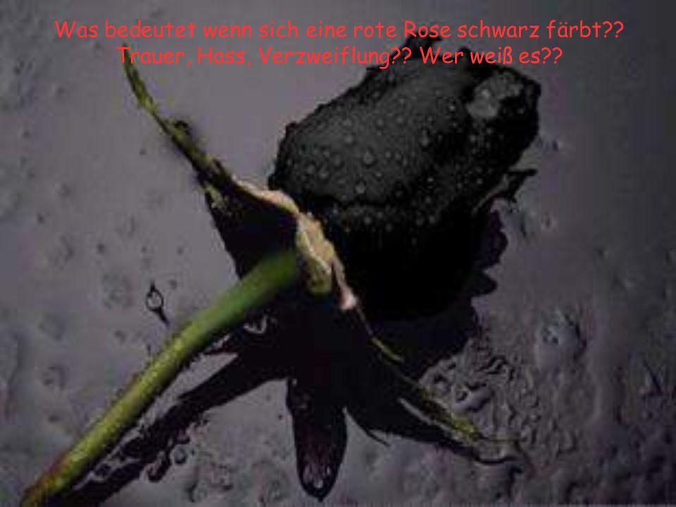 Was bedeutet wenn sich eine rote Rose schwarz färbt?? Trauer, Hass, Verzweiflung?? Wer weiß es??
