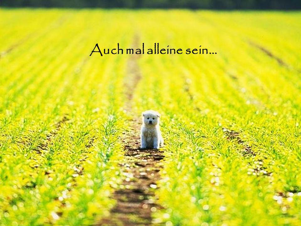Auch mal alleine sein…