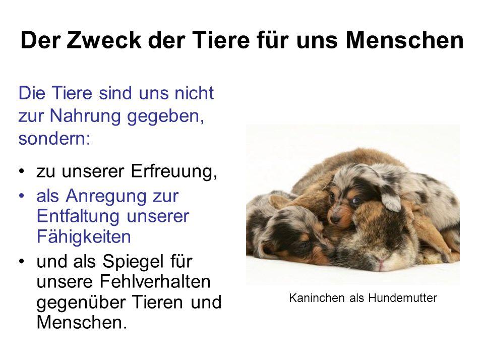 Die Tiere sind uns nicht zur Nahrung gegeben, sondern: Der Zweck der Tiere für uns Menschen zu unserer Erfreuung, als Anregung zur Entfaltung unserer