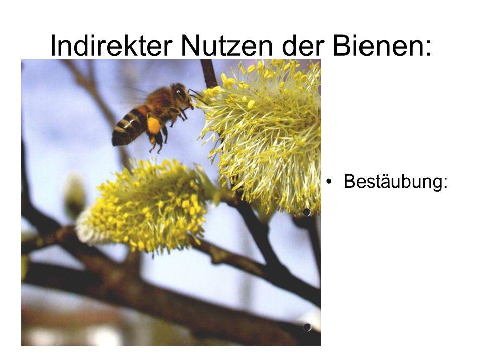 Indirekter Nutzen der Bienen: Bestäubung: