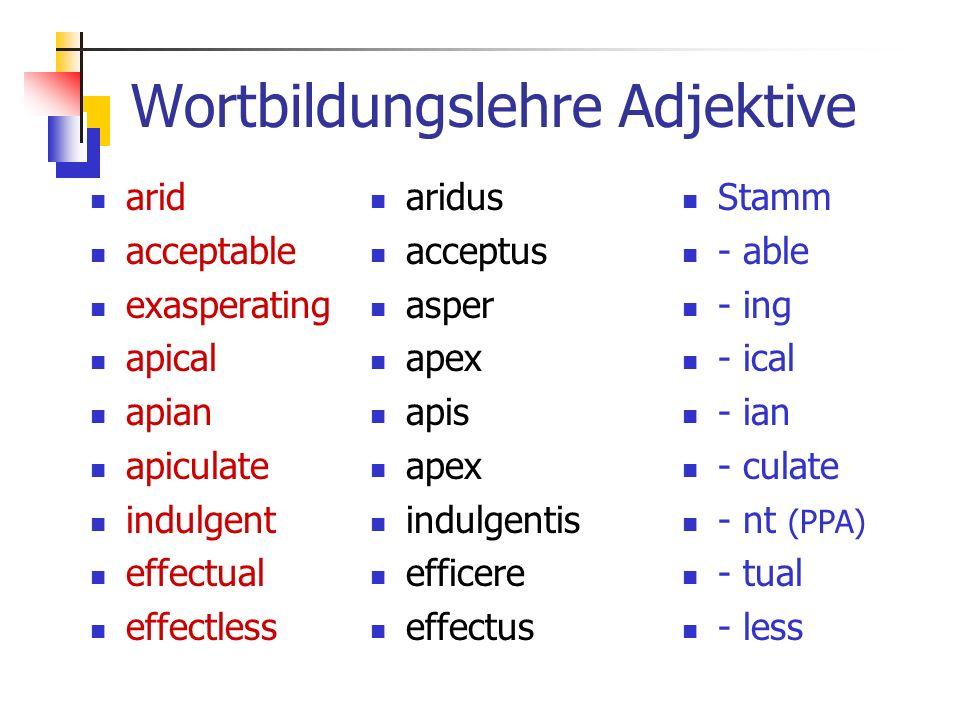 Wortbildungslehre Adjektive arid acceptable exasperating apical apian apiculate indulgent effectual effectless aridus acceptus asper apex apis apex indulgentis efficere effectus Stamm - able - ing - ical - ian - culate - nt (PPA) - tual - less
