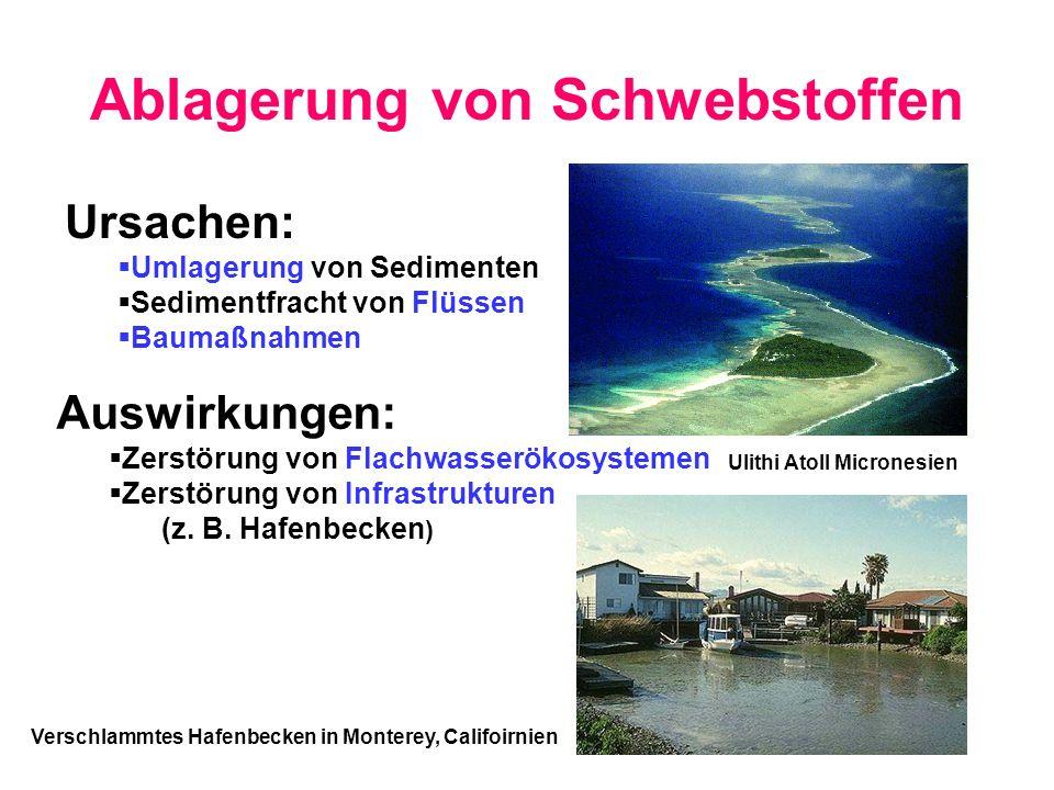 Ablagerung von Schwebstoffen Ursachen: Umlagerung von Sedimenten Sedimentfracht von Flüssen Baumaßnahmen Auswirkungen: Zerstörung von Flachwasserökosy
