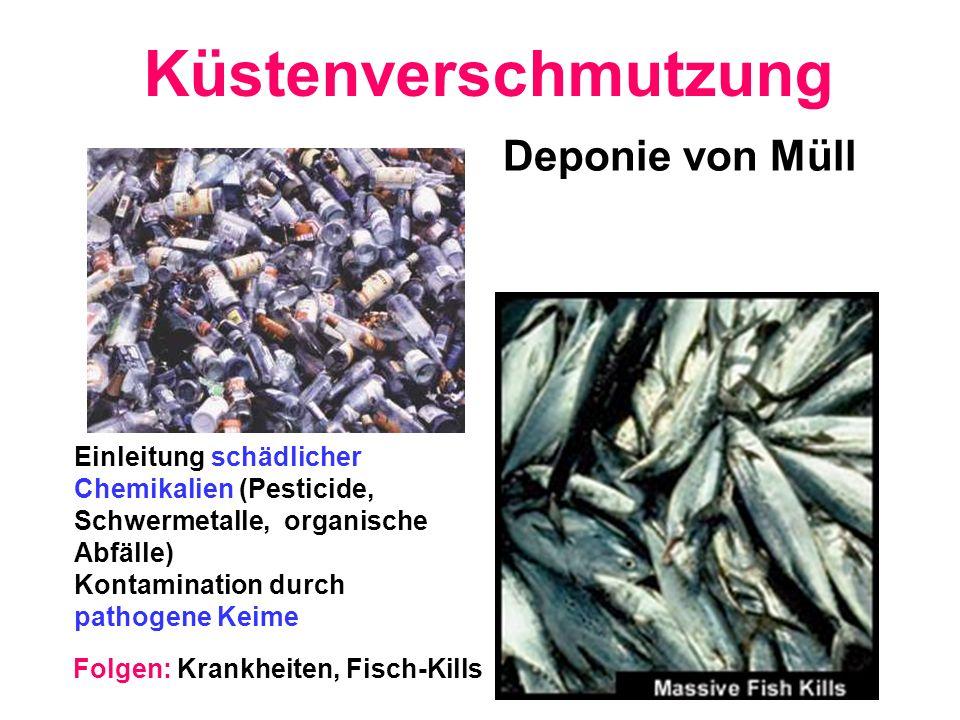 Küstenverschmutzung Deponie von Müll Einleitung schädlicher Chemikalien (Pesticide, Schwermetalle, organische Abfälle) Kontamination durch pathogene K