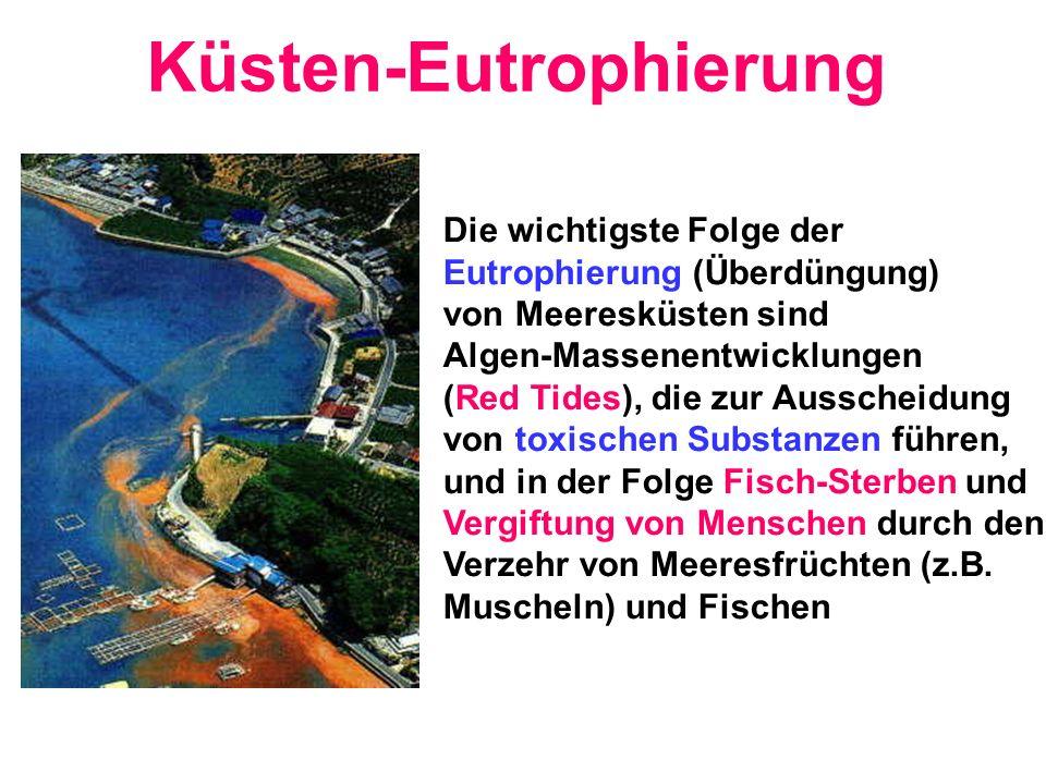 Küsten-Eutrophierung Die wichtigste Folge der Eutrophierung (Überdüngung) von Meeresküsten sind Algen-Massenentwicklungen (Red Tides), die zur Aussche