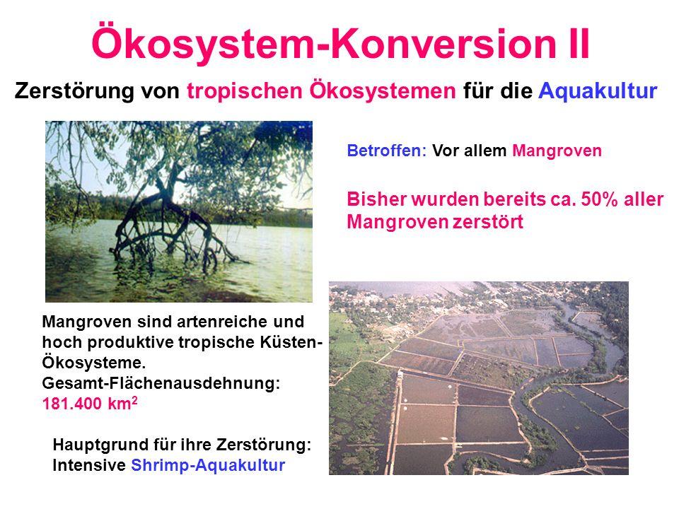 Ökosystem-Konversion II Zerstörung von tropischen Ökosystemen für die Aquakultur Betroffen: Vor allem Mangroven Bisher wurden bereits ca. 50% aller Ma