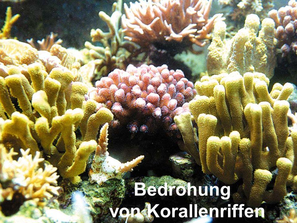 Bedrohung von Korallenriffen