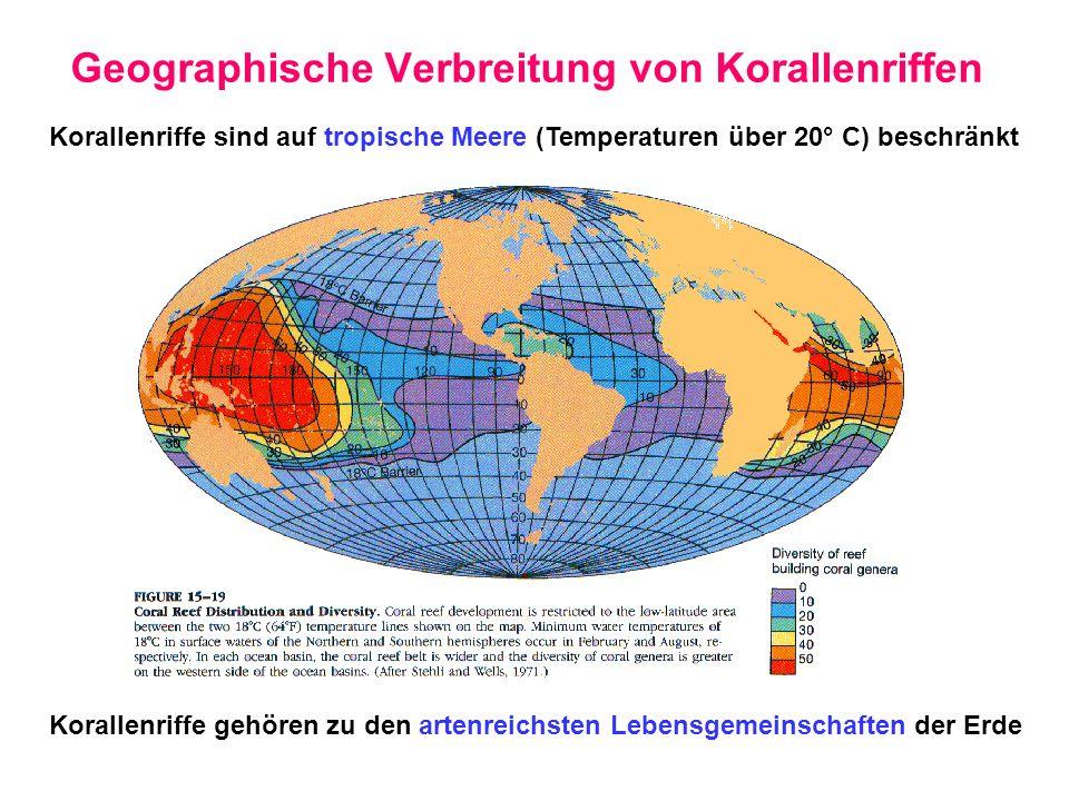 Geographische Verbreitung von Korallenriffen Korallenriffe sind auf tropische Meere (Temperaturen über 20° C) beschränkt Korallenriffe gehören zu den
